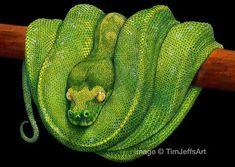 Tim Jeffs Art: Color Drawings