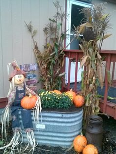 Fall 2013 old galvanized water trough,mums,squash and cornstalks!