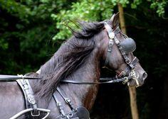 VOLTA - horses, horse riding and horse riding