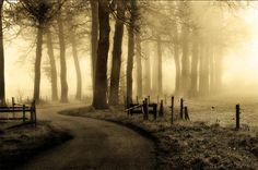 Delicate Suspense in Misty Photos | DesignFloat Blog