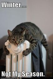 12 Pets Who Absolutely Refuse To Share The Heat 12 Pets Who Absolutely Refuse To Share The Heat – Funny Cat Quotes funnycat catquotes cats absolutely Heat Pets refuse share winteranimals winterbastelnkinder winterboots wintercoffee wintercouple winte Funny Animal Memes, Funny Animal Pictures, Cute Funny Animals, Cat Memes, Cute Cats, Funny Cats, Animals And Pets, Baby Animals, Animals Crossing