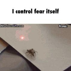 This is great...Hahahahaha..... I could train it to crawl up legs.....Hahahahaha!!!!