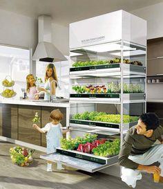 this is amazing! indoor hydroponic garden.
