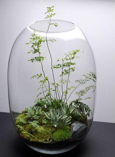 "wagamamaya: "" Terrariums : 盆栽的な観葉植物 | wagamamaya """