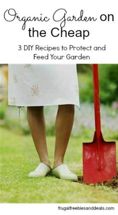 Organic Garden on the Cheap ~ 3 DIY Recipes to Protect and Feed Your Garden