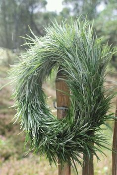 simple wreath, doesn't say what kind of grass it's made off.  I made a similar one  with twigs of brooms, after 2 month it's still green! (note: attach all in one direction)