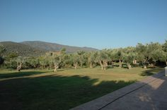 Gera's Olive Grove ESTATE surrounded by an orchard of Olive groves Lodges, Acre, Natural Beauty, Greece, Island, Traditional, Landscape, Greece Country, Cabins