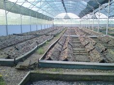 Our organic and biodynamic Snail Farm in the island of Crete, Greece