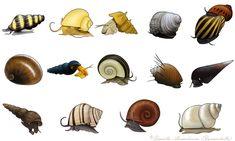 Clea helena (Anentome helena), Apple snail (Pomacea diffusa), Brotia (Brotia pagodula), Blue turbo snail (Celetaia persculpta), Nerite snails (Neritina natalensis sp.), Dusky Nerite (Neritina pulligera knorii), Gold rabbit snail (Tylomelania sp.), Giant ramshorn snail (Marisa Cornuarietis), Hairy trumpet snail (Marisa Cornuarietis), Faunus ater, Malaysian trumpet snail (Melanoides tuberculata), Zebra apple snail (Asolene spixi), Red Ramshorn Snail (Planorbarius corneus), Filopaludina…