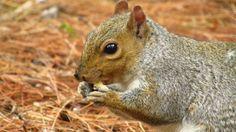 squirrel by Vidislava Ⓥ Todorova on Squirrel, My Photos, Animals, Animales, Animaux, Squirrels, Animal, Animais, Red Squirrel