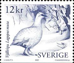 Suecia 2009-La Perdiz Nival o Lagópodo Alpino, es una especie de ave galliforme de la familia Phasianidae ampliamente extendida por las regiones frías del Holártico, y que también habita en las partes altas de las principales cadenas montañosas de Euroasia y Norteamérica, entre el límite superior de los árboles y las nieves perpetuas.