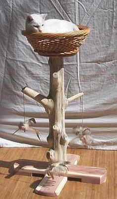 36 Inch Red Cedar Cat Scratching Post and Nest as seen on Martha Stewart Show Who Said a Cat Tree Couldnt Look Like an Actual Tree? Rustic Cat Furniture, Pet Furniture, Diy Cat Tree, Cat Trees, Cat Scratching Post, Cat Enclosure, Wall E, Cat Room, Cat Condo