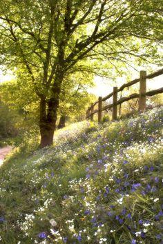 wildflower-bank (par Mark Candlin)