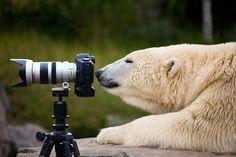 Brilliant #wildlife photo ha ha