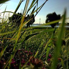 Summ Brumm Morgens auf der Wiese ... Kommt alle gut in die neue Woche :-) #duesseldorf #bilk #urban