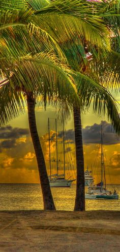 ~~St Maarten ~ Sunset, Ships and Palm Trees, Simpson Bay, Carribean by Karen Wallace~~