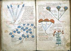 The Pseudo-Apuleius Herbarium