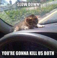 Funny Monkey Memes | slow down scared cat car meme Fantastically Funny Animal Pictures (20 ...