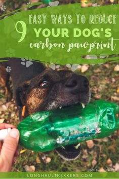 9 Ways to Reduce Your Dog's Carbon Pawprint - Long Haul Trekkers Reducing Carbon Footprint, Compost Bags, Green Business, Long Haul, Plant Based Diet, Dog Toys, Dog Food Recipes, Sustainability, Pets
