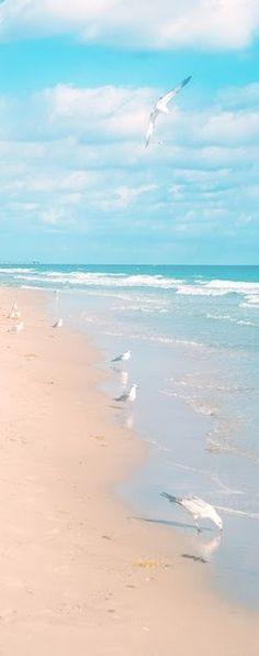 Ocean Sea: Sun, sand, surf, and seagulls. Beach Art, Ocean Beach, Ocean Waves, Juno Beach, I Love The Beach, Pretty Beach, Photos Voyages, Beautiful Beaches, Seaside