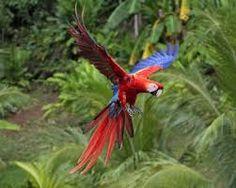 macaw open wings - Pesquisa Google