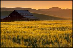 Photo: Barn and field of tall grass at sunrise, Tassajara Region, near Livermore, Contra Costa County, California