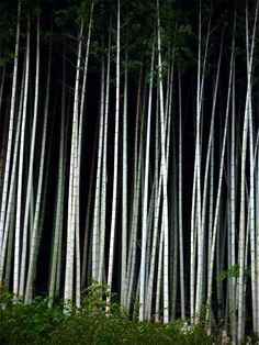 Bamboo Forest in Kyushu Japan Andrew Marston.  Incredible. One day I hope to be as good.