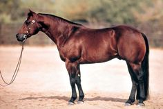 Chic Please (Smart Chic Olena x San O Lenita) LTE $200,000+1998 NRHA Open Futurity Champion1998 NRCHA Open Snaffle Bit Futurity Reserve Champion1998 Equistat All-Division Reined Cowhorse Reserve Champion