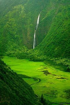 Waimanu Valley, Hawaii.  Looks like one of the greenest places on the Earth!