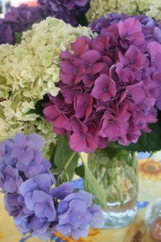 Beautiful purples.