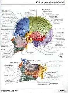 Bibliografia Atlas de Anatomia Humana de Frank H. Netter