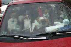22 dogs in a station wagon