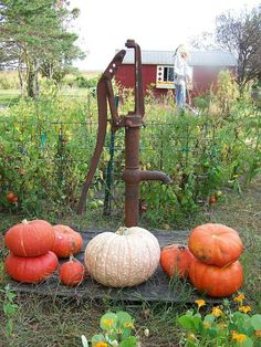 Love the country life Water Well, Harvest Time, Fall Harvest, Primitive Fall, Fall Pictures, Fall Images, Fall Pumpkins, Happy Fall, Country Living