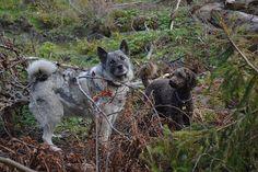 Gårdstunet Hundepensjonat: Deilig høst og skjønne hunder på tunet!