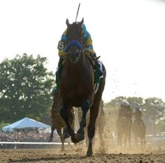 American Pharoah (Pioneerof the Nile) romped an easy winner of the 147th running of the $1.5 million Belmont S. (G1) on Saturday to end a 37-year drought and become the 12th Triple Crown winner. The Zayat Stables homebred was 5 1/2 lengths clear of his closest rival on the wire while finishing 1 1/2 miles over the fast Belmont Park dirt in 2:26.65.