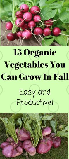 In fall, veggies are into some more action before the snow starts to fall. I'm here today to write about the 15 organic vegetables you can grow in fall.