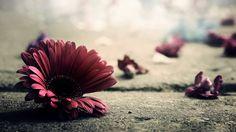 Image for Flower Vintage Wallpaper 1080p