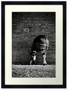 Black and white framed okapi picture? Amazing. Must havvve