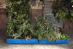 Wolly Pockets are all the rage... fabric planters you can hang on walls... made from recycled plastic bottles... satisfying so many of my passions ... green, gardening, decorating, and doing things with a personalized style.