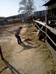 Our kids think it is so fun pushing up feed for the heifers. While cattle eat they push the feed farther away. We check the feed often to make sure it is close enough for them to reach.
