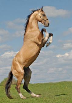 """""""His neigh is like the bidding of a monarch, and his countenance enforces homage.""""     ~William Shakespeare"""