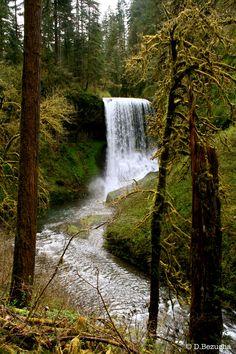 Drake Falls, Silver Falls State Park.