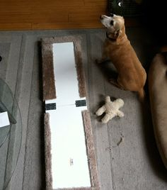 How to Build a Portable Ramp for Your Dog » Blogstetter