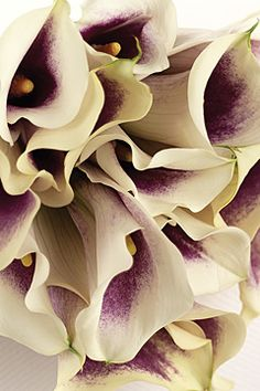 I love lilies!  I think these Picasso Miniature Calla Lilies are just beautiful!