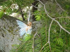 Catherine Denton: Fairy Sightings