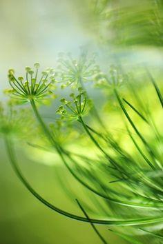 Subtiel, verfijnd en groen.
