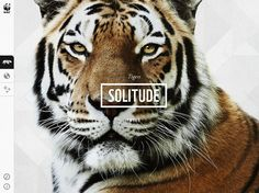 1 | The WWF's Brilliant New App Lets You Safely Swipe At Tigers, Rhinos, And More | Co.Design: business + innovation + design