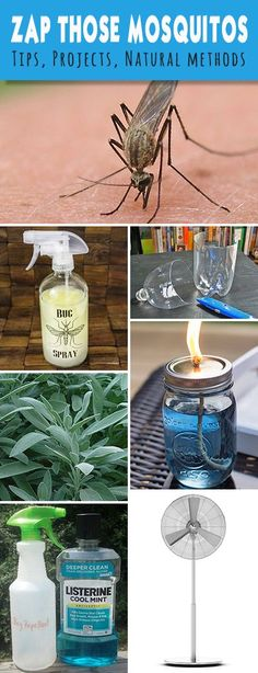 Zap Those Mosquitos! Lots of Tips, Ideas, Projects and Natural Methods to get rid of those pesky mosquitos!