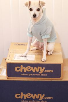 #ChewyBoxLove @chewy