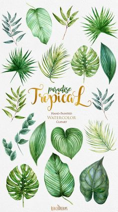 Tropic Clipart Tropical Watercolor Leaves Bright by ReachDreams . - Image + Tropic Clipart bright tropical watercolor leaves from ReachDreams . Palm Tree Leaves, Tropical Leaves, Palm Trees, Green Leaves, Tropical Flowers, Hawaiian Flowers, Hawaiian Names, Tropical Style, Tropical Art